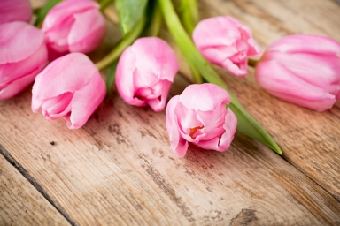 Tulips_Closeup_Wood_planks_Pink_color_520694_1280x853