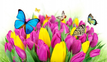 flowers-colorful-spring-butterflies-tulips-purple-yellow-fresh-beautiful-cvety-tyulpany-babochki-vesna.jpg