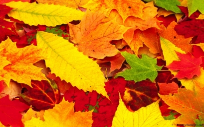 Red-Autumn-Leaves-Photo