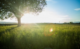 contre_jour_leaves_lens_flare_meadow_nature_park_sky_summer-948356.jpg