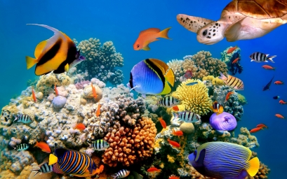 wallpapers-underwater_world-0.jpg